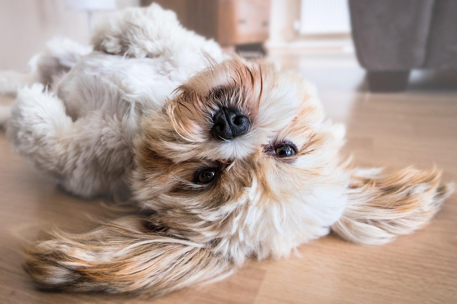 interdire un chien dans une location